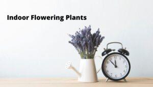Indoor-Flowering-Plants